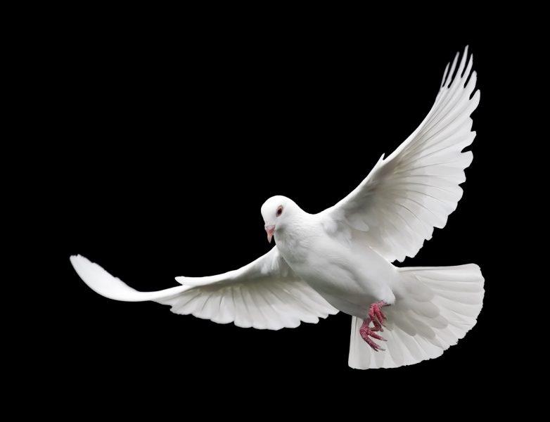 Pigeon assurance