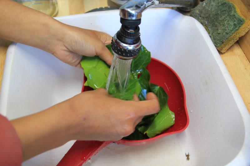 Nettoyage du lierre pour la lessive