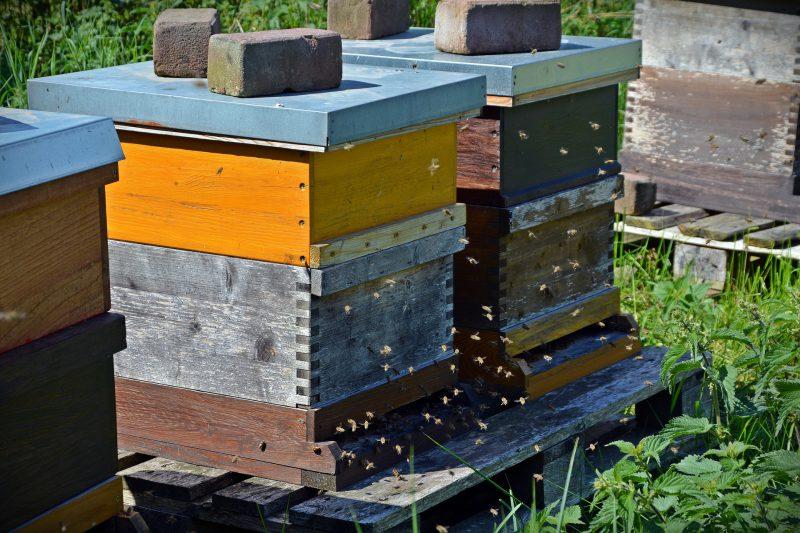 Ruches avec abeilles