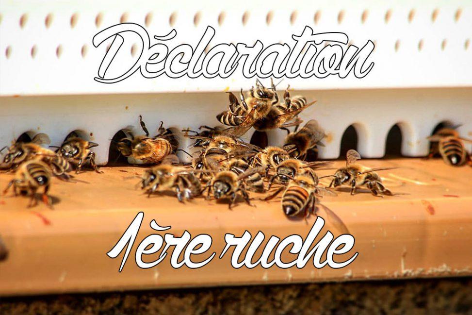 Première déclaration de ruche