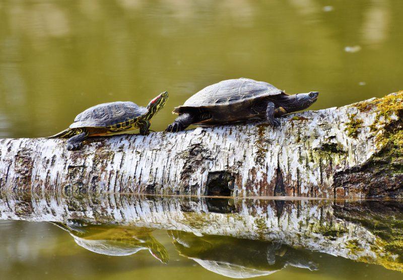 Biodiversité dans une mare naturelle