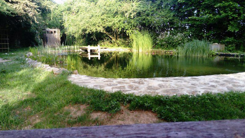Exemple de bassin naturelle réussi