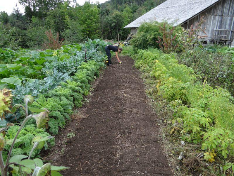Jardin potager pour l'autonomie alimentaire